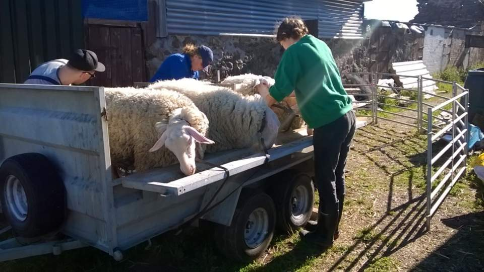 Lucky Ewe Activities - Cupar